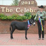 Topper Wins Best of Breed at The Celebration