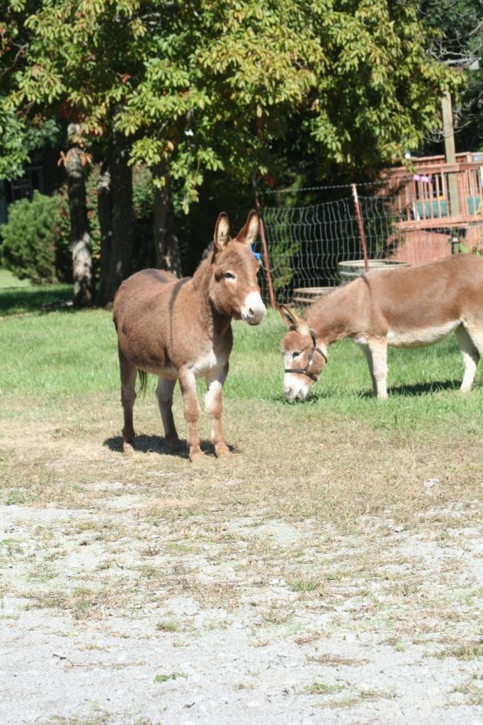Donkey 004