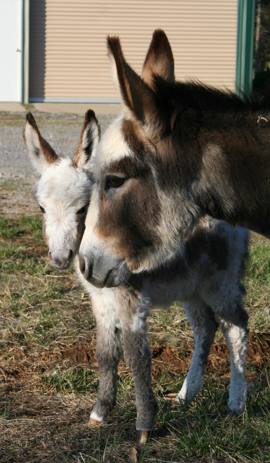 Precious and her baby, Smoke were a favorite.